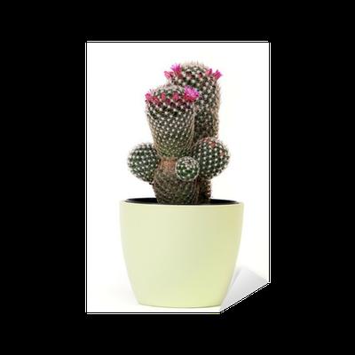 kaktus mit bl te sticker pixers we live to change. Black Bedroom Furniture Sets. Home Design Ideas
