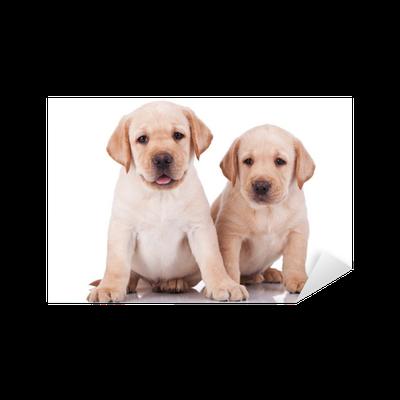 Little Labrador Retriever Puppies Panting Sticker Pixers We