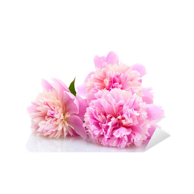 Pink peonies flowers isolated on white sticker pixers we live pink peonies flowers isolated on white sticker pixers we live to change mightylinksfo
