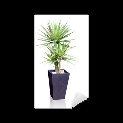Sticker plante yucca pixers nous vivons pour changer for Plante yucca chat