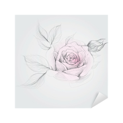Rose Realistic Vector Sketch Of Flower Sticker Pixers We Live To Change