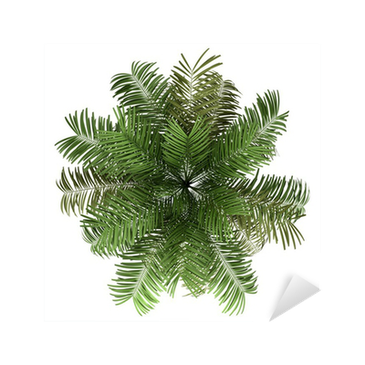 top view of areca palm tree isolated on white background ...