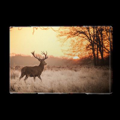 tableau sur toile red deer au soleil du matin pixers nous vivons pour changer. Black Bedroom Furniture Sets. Home Design Ideas