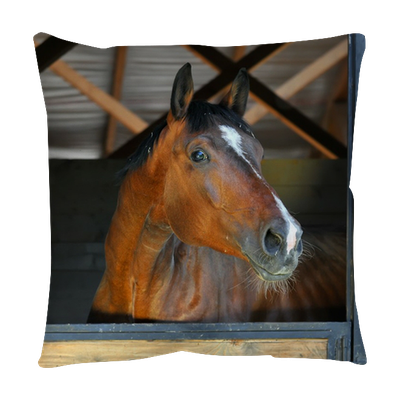 Bay Horse In Stable Throw Pillow Pixers 174 We Live To Change
