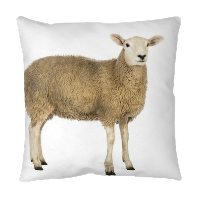 Side View Of A Sheep Looking Away Throw Pillow Pixers