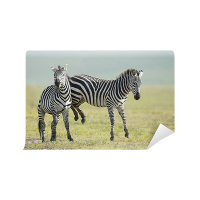 mural Zebra profile on the plains of the Ngorongoro crater  wall art nature Zebra traditional paste and glue or removable wallpaper
