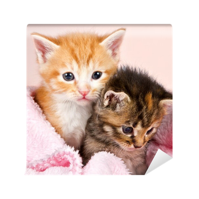 baby kittens wrapped in a pink blanket wall mural � pixers