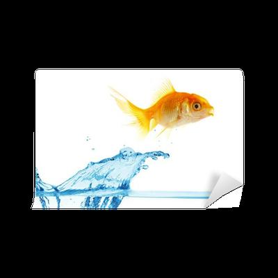 gold small fish...