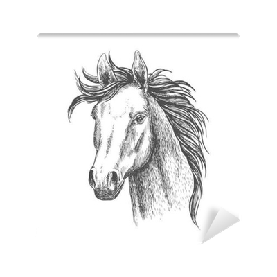 Mare Horse Sketch For Equestrian Sport Design Wall Mural Pixers We Live To Change