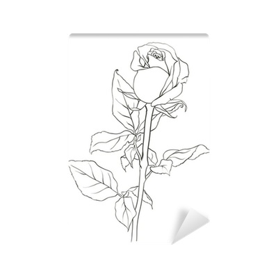 Picture Rose Sketch From Nature Vector Illustration Wall Mural Pixers We Live To Change