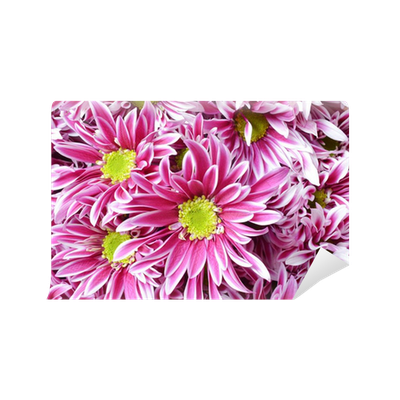 Pink flower with long thin petals a yellow center wall mural pink flower with long thin petals a yellow center wall mural pixers we live to change mightylinksfo