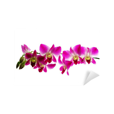 Red orchids isolated white background Wall Mural • Pixers ...
