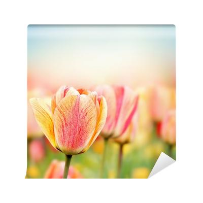 Tulip Decorative Pillows Canada