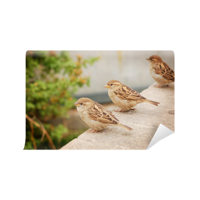 Three sparrows wall mural pixers we live to change thecheapjerseys Gallery