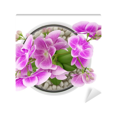 Top View Of Purple Orchid Flower In Glass Vase Isolated On White