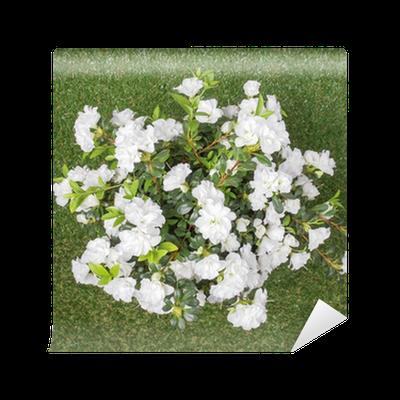 White azalea flower wall mural pixers we live to change mightylinksfo