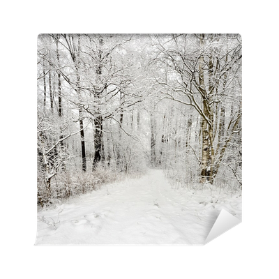 Winter Scene Road And Forest With Hoar Frost On Trees