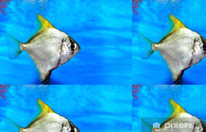 Papel de Parede em Vinil Colorful fish in aquarium saltwater world - Vida aquática e marinha