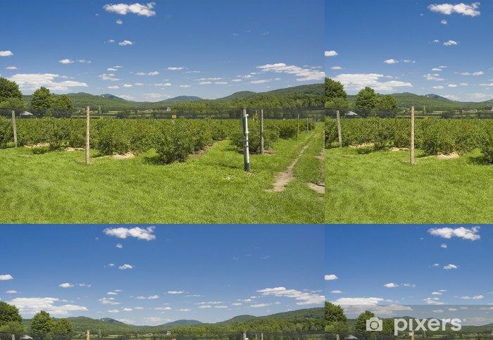 Papel Pintado Estándar Una plantación de arándanos con montañas en el fondo - Campos
