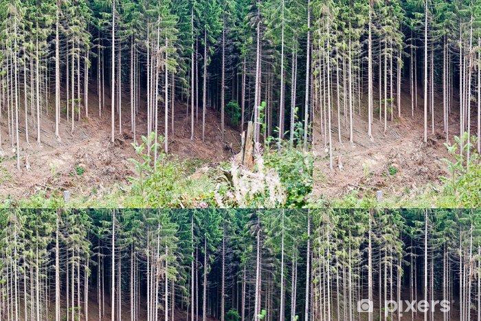 Tapete Waldlichtung Am Nurburgring Pixers Wir Leben Um Zu