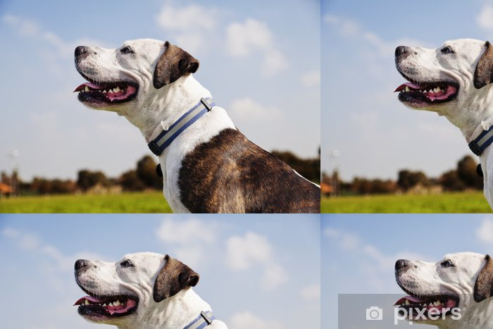 Vinyltapet Lycklig Pitbull på Park - Däggdjur