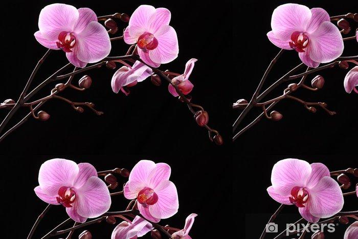 Vinyltapet Orchidea - Blommor