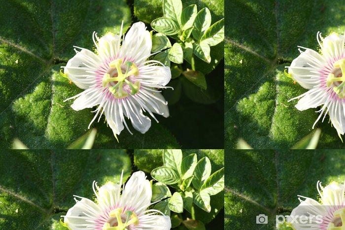 Passiflora foetida L. Vinyltapet - Blomster
