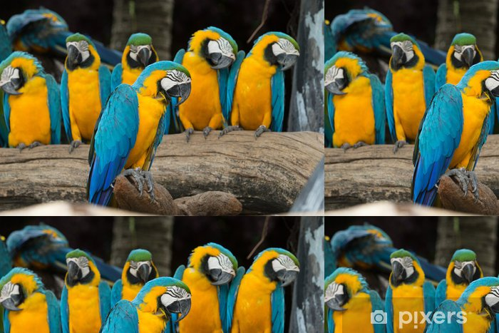 macaw bird Vinyl Wallpaper - Themes