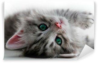 Abwaschbare Fototapete Kitten Rest - isoliert