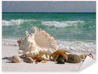 Pixerstick per Tutte le Superfici Conchiglie sulla spiaggia di sabbia bianca della Florida
