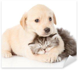 Pixerstick per Tutte le Superfici Cucciolo di cane golden retriever abbracciare gatto britannico. isolato