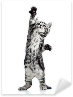 Pixerstick per Tutte le Superfici Giocoso gatto gattino isolato su bianco