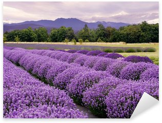 Adesivo Pixerstick Lavender Farm a Sequim, Washington, USA