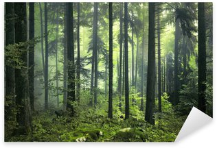 Pixerstick per Tutte le Superfici Mysterious foresta oscura