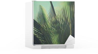 Adesivo per Frigorifero Abstract tropical background vintage. Foglie di palma al sole.