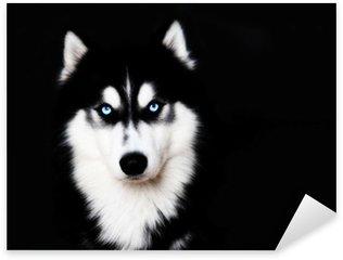 Adesivi husky pixers viviamo per il cambiamento - Cane occhi azzurri ...