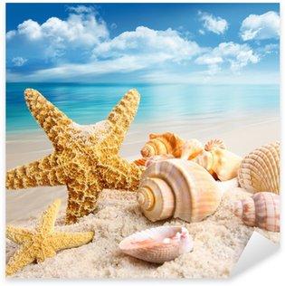 Pixerstick per Tutte le Superfici Stella di mare e conchiglie sulla spiaggia