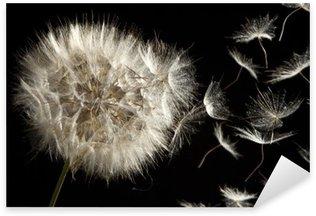 Pixerstick para Todas Superfícies Dandelion Loosing Seeds in the Wind