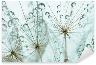 Pixerstick para Todas Superfícies Dandelion seed with drops