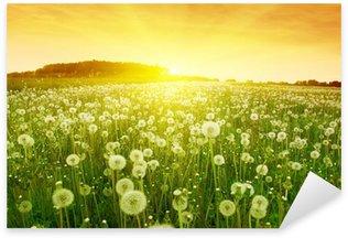 Pixerstick para Todas Superfícies Dandelions in meadow during sunset.