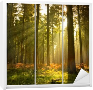 Adesivo de Guarda-roupas Beautiful Forest