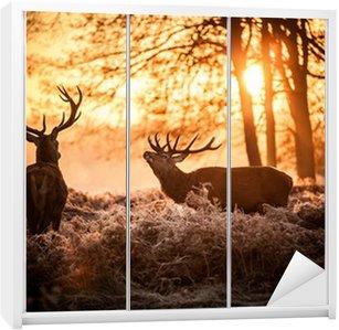 Adesivo de Guarda-roupas Red Deer in Morning Sun.