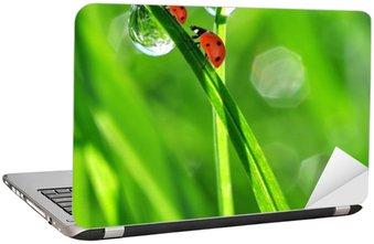 Adesivo de Notebook fresh morning dew and ladybirds
