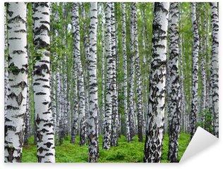 Pixerstick para Todas Superfícies nice summer birch forest
