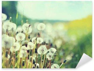 Pixerstick para Todas Superfícies Photo presenting field of dandelions