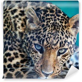 Afwasbaar Fotobehang Leopard