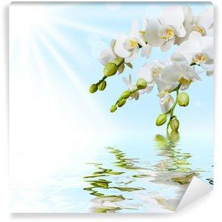 Afwasbaar Fotobehang Mooie witte orchidee