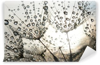Afwasbaar Fotobehang Paardenbloem zaden met dauwdruppels