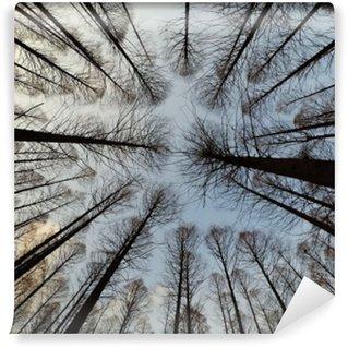 Afwasbaar Fotobehang Prachtig bos en blauwe hemel