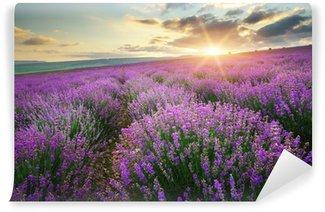 Afwasbaar Fotobehang Weide vol met lavendel in de ochtend